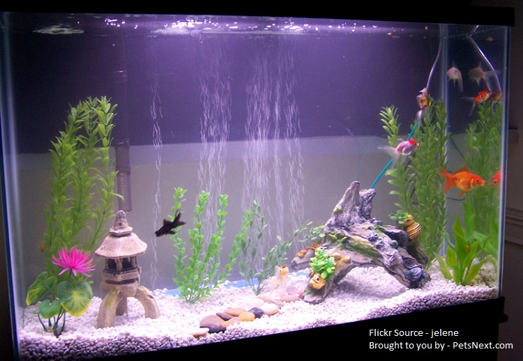 Aquarium for goldfish