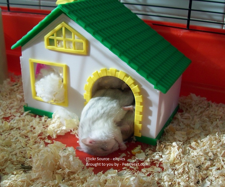 Bedding for hamster