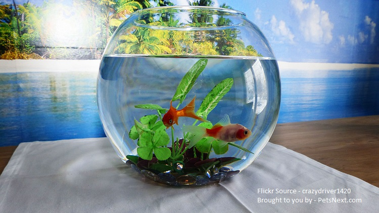 How To Take Care Of Goldfish Pets Next