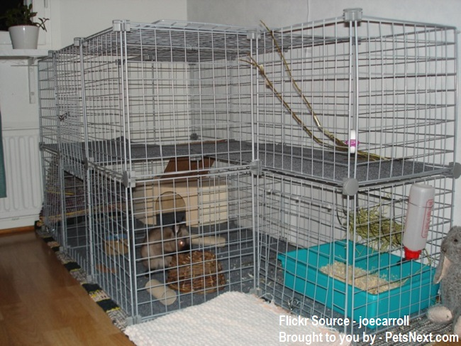 Bunny-Cage