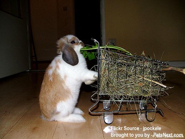 Feeding-Bunny