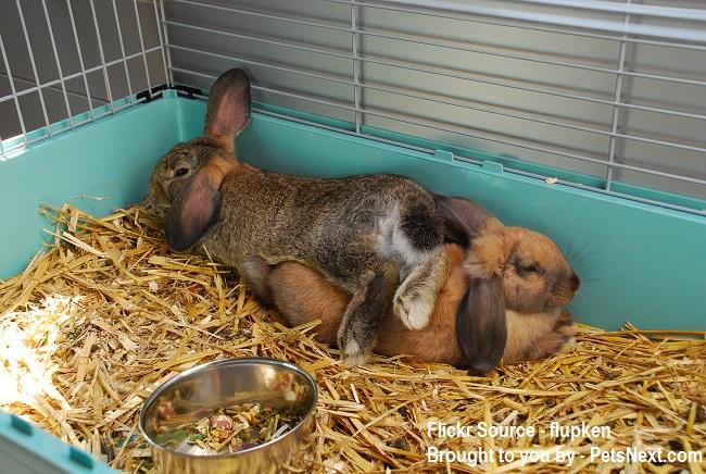 Pair-of-Bunnies