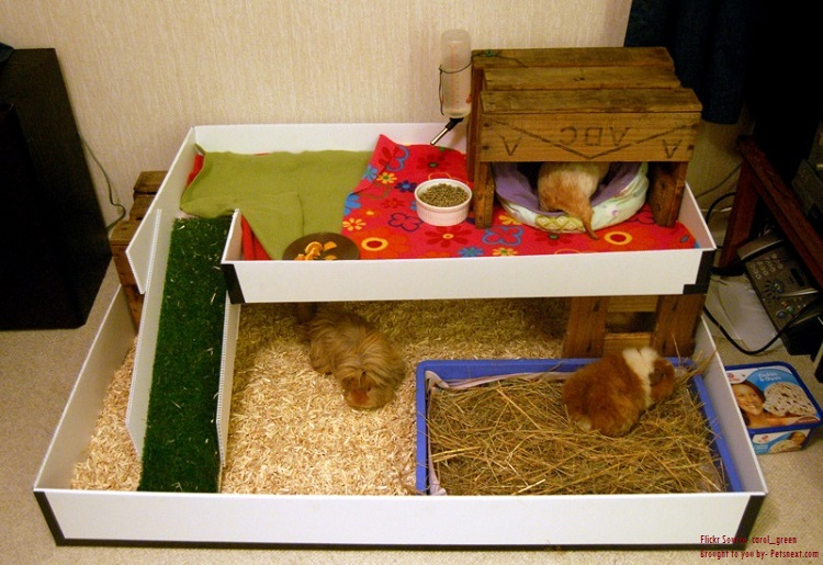 How to take care of guinea pigs pets next for How to build a guinea pig house